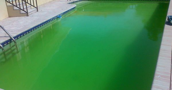 If Your Pool Is Green And Cloudy Even After Shocking The O 39 Jays Pools And Swimming