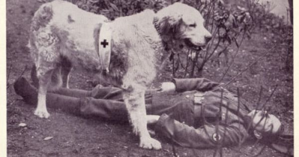 Dog Great Pyrenees Red Cross War Dog 1930 Print Ebay War Dogs Great Pyrenees Pyrenean Mountain Dog