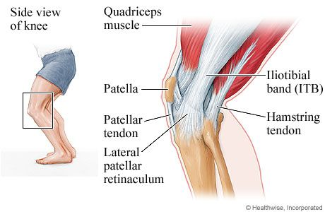 43++ Tendon back of thigh trends