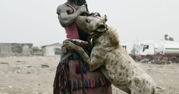 Pitbull Mixed With Hyena Hyena > pit bull | Photography ...