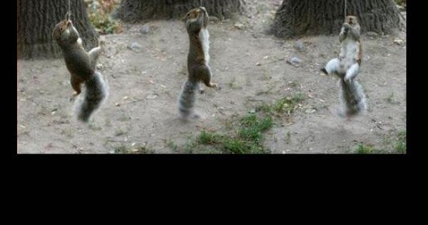 Secret Squirrel Protect Your Nuts Patch: Funny Photos, Squirrel Training Camp, Squirrels Climbing