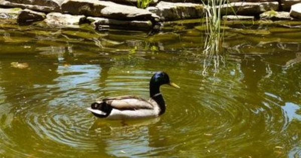 Homemade filter for a duck pond pond filters duck pond for Homemade biofilter for duck pond