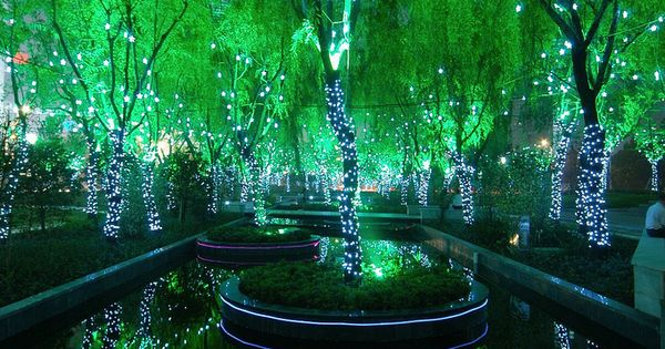 Magic Forest, Shanghai, travelling collections travel photos travel guide travel tips
