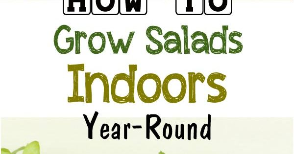 Did you know you can grow fresh salad greens in your home any time of year it s true and it s - Salads can grow pots eat fresh ...