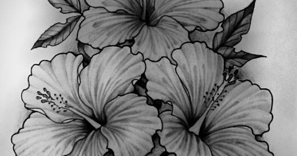 Viva le bbcheese tattoos pinterest tattoo photos and for Hibiscus flower tattoo sketches