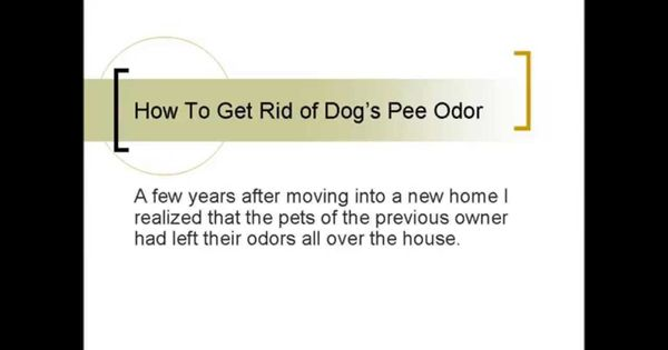 a bothersome scent how to get rid of dog or cat pee smell general help videos pinterest. Black Bedroom Furniture Sets. Home Design Ideas