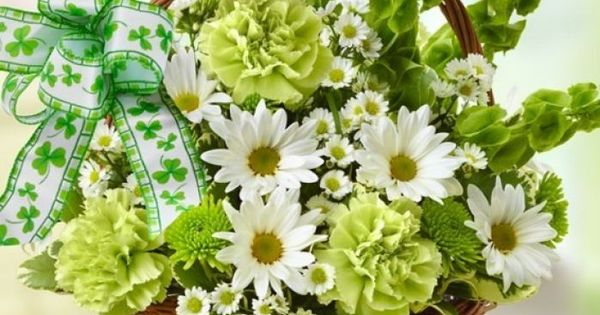 St patrick 39 s day flower basket shamrock ideas pinterest flower basket saints and flower for St patrick s church palm beach gardens