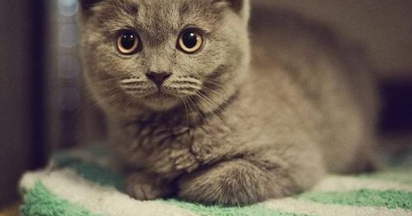Cat - gorgeous picture