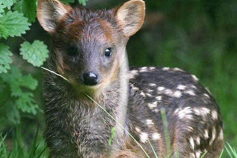 Tiny deer (called a Southern cute baby Animals Baby Animals
