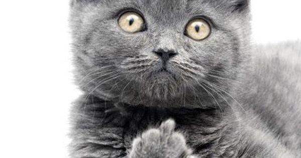 nom nom cat