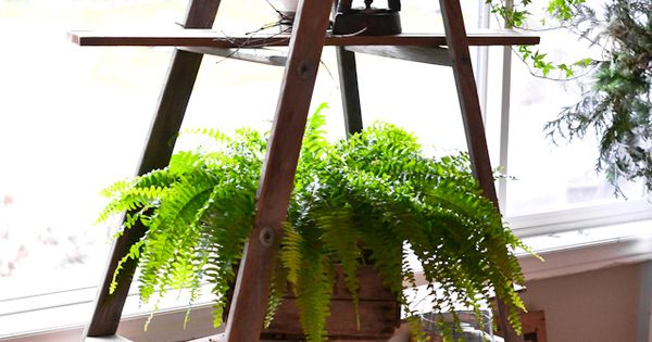 Turn an old ladder to a cool indoor plant rack!