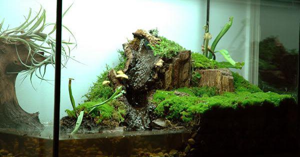 semi aquatic vivarium set up this is beautifl but i would