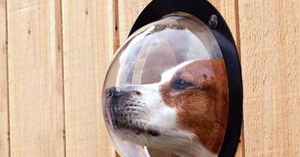 Dog window - too funny & a great idea