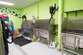 Image Result For Dog Grooming Salon Layout Dog Grooming Salons