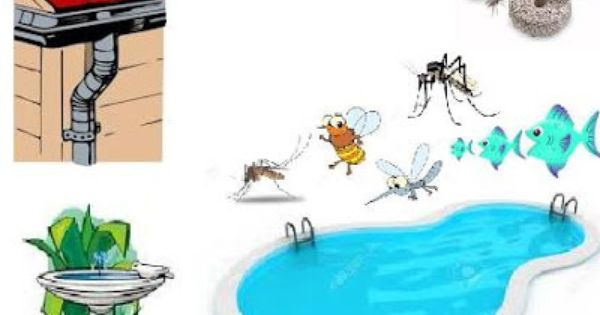 How To Get Rid Of Mosquitoes In The Swimming Pool In The House