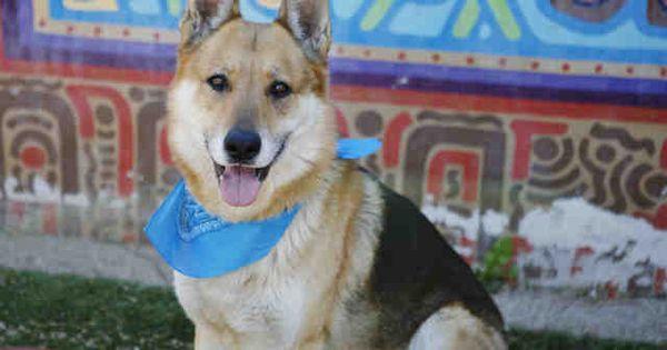 Take Me Home Tuesday Arizona Humane Society Dogs for