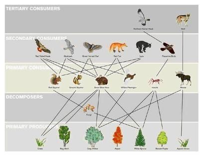 Picture Rainforest Food Web Food Web Ecology Design