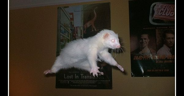 Draco Malfoy: flying ferret!