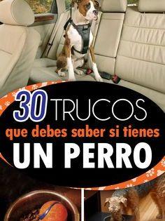 30 Trucos Que Todo Dueño De Un Perro Debe Conocer Te Facilitarán La Vida Dueños De Perros Pulgas Perros Perros Mascotas