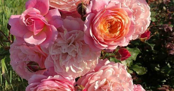 1 558 Me Gusta 20 Comentarios H M H S K B En Instagram Good Morning Floral Wreath Flowers Rose