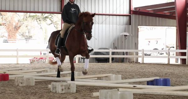 Cavaletti Training For Horses With Erika Jansson Dressage