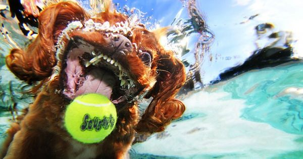 I've never been more afraid to be a tennis ball. Fantastic underwater