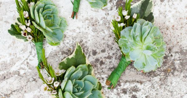 #succulents, boutonniere Photography: Emily Scannelll Photography - emilyscannell.com Wedding Planning: Penzi -