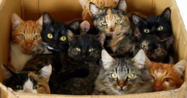 Crazy Cat Lady Starter Kit (hee hee for my sister - love