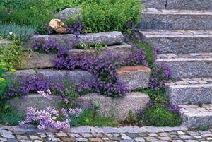 Rock Stars Plants That Grow In Rock Walls With Planting Instructions Rock Wall Gardens Garden Photos Rock Garden