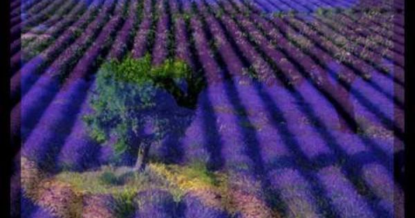Lavender Fields Day Spa Hours