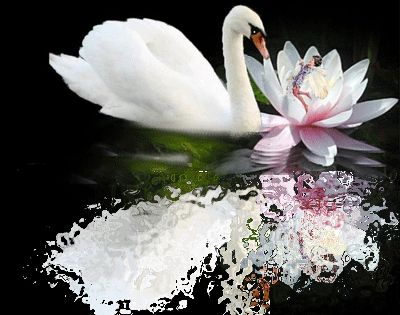 Glitter graphics swans uploaded by batoul in category animated gifs