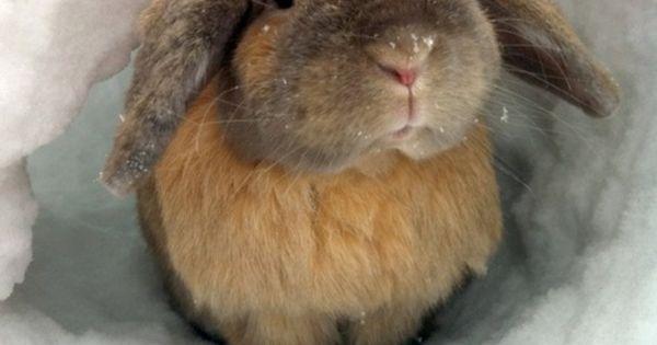 Cute fluffy bunny!