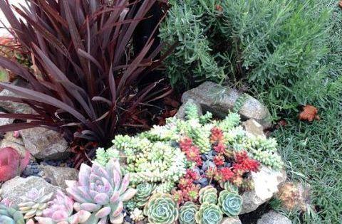 Ideas Para Decorar Tu Jardin Con Piedras Y Rocas Jardin Con Piedras Jardines Suculentas Jardin