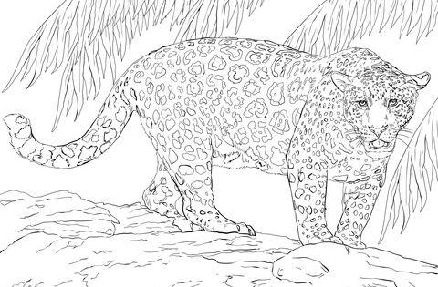 Gro er jaguar ausmalbild zum ausmalen pinterest ausmalbilder ausdrucken und kostenlose - Coloriage magnifique ...