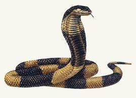Egyptian Cobra Escapes From Bronx Zoo (met afbeeldingen ...
