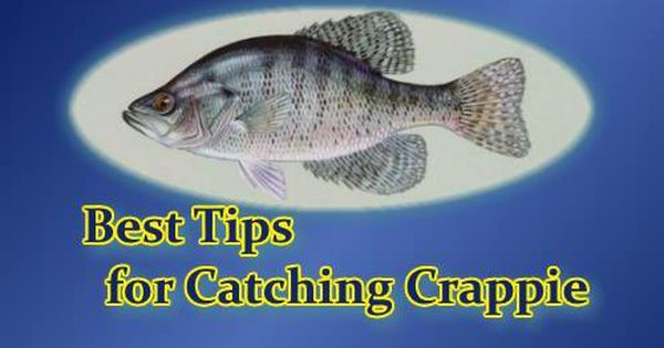 Best crappie fishing tips i have tried to compile here for Crappie fishing secrets