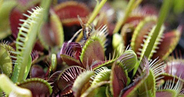 venus flytrap plant and frog relationship