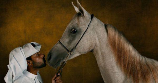 Le Cheval Et Les Sports Equestres Pur Sang Arabe Animaux Cheval