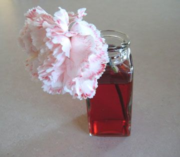 Food Coloring Flowers Make And Takes Dye Flowers Flower Making Carnation Flower