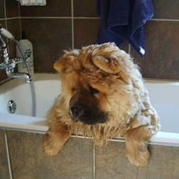 This Is A Dog Bath I Would Like To Avoid Big Big Hair Involved