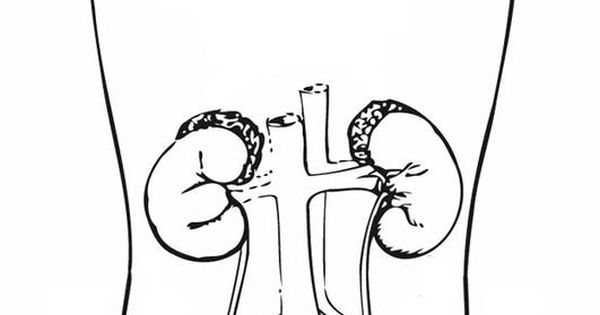 free coloring pages of human urinary system