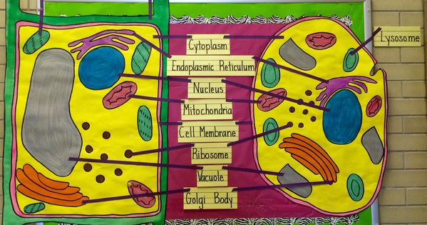 Creative Classroom Design Ideas ~ Cell biology bulletin board for my th grade classroom