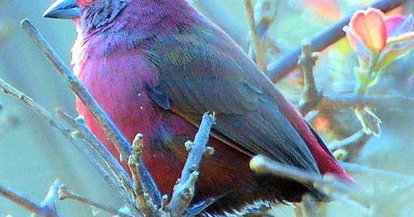 Pretty Bird picture