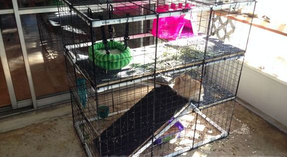 Diy rabbit bunny cage for cheap nothing but country for Cheap c c cages