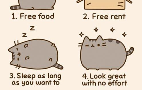 Reasons you should consider being a cat.