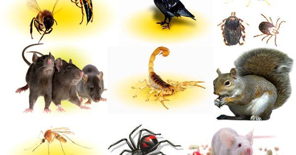 Pest Control Technology Against Bedbugs Carpenter Ants