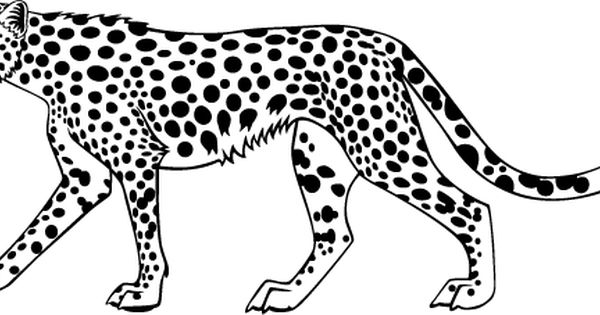 Cheetah Animal Coloring Pages Google Search