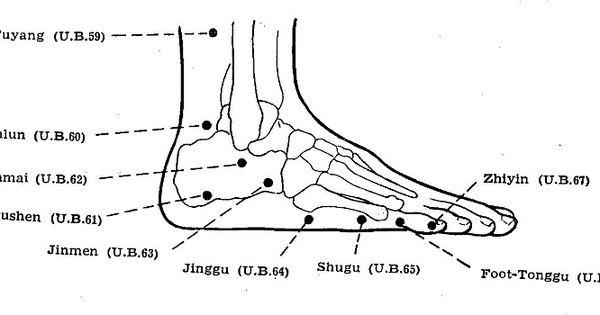 acupuncture  a comprehensive text shanghai