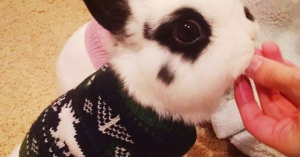 These cozy buns who are all about spreading cheer. | 31 Pictures