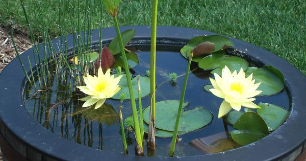 make your own pond using a large plant pot